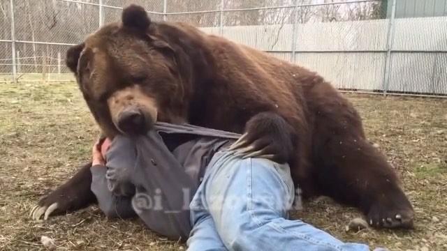 دوستی جالب انسان و خرس قهوهای