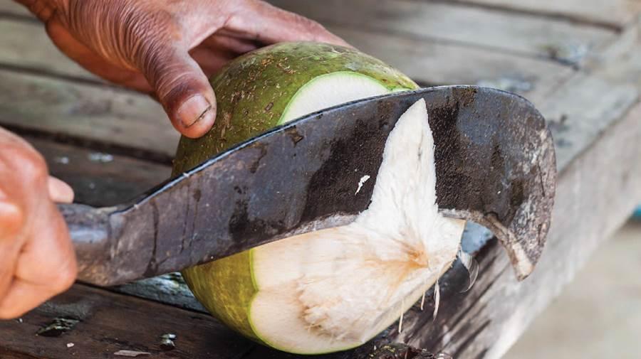 نارگیل تازه در هند مزه دیگری دارد