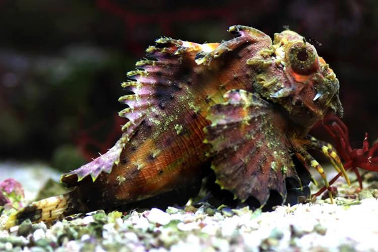 کشف اتفاقی ماهی عجیبی که میتواند راه برود