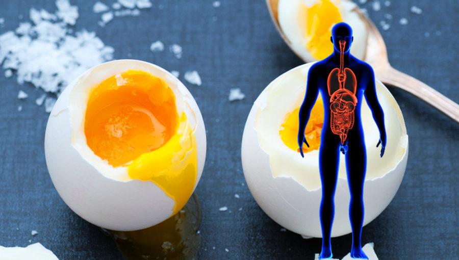 اگر هر روز ۲ عدد تخم مرغ بخورید، چه اتفاقی در بدن شما رخ می دهد؟