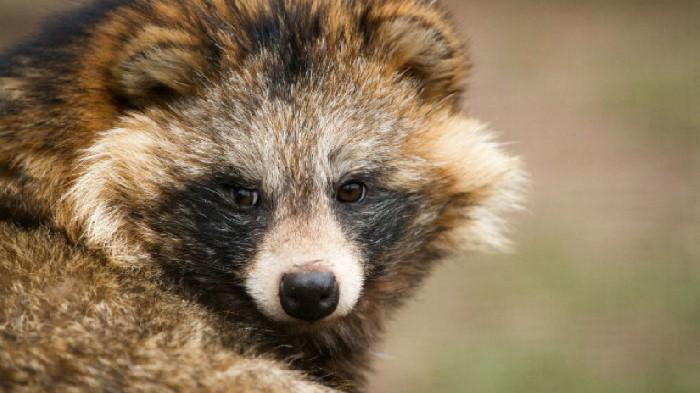 10 جانور زیبا و منحصر به فردی که وجودشان در طبیعت را باور نخواهید کرد