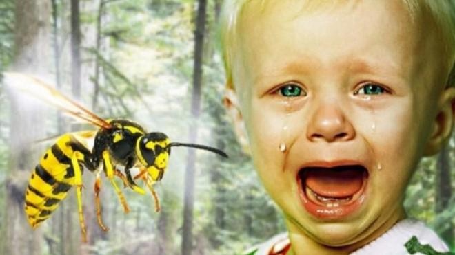 5 کاری که باید بلافاصله پس از نیش زنبور انجام دهید تا خطری شما را تهدید نکند